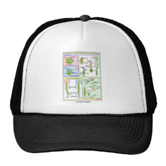 Life Cycle Of A Typical Moss (Bryophyte) Mesh Hats