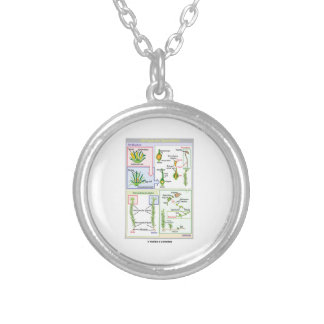 Life Cycle Of A Typical Moss Bryophyte Silver Plated Necklace