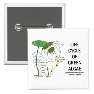 Life Cycle Of Green Algae Pinback Button