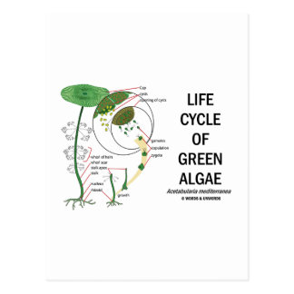 Life Cycle Of Green Algae Postcard