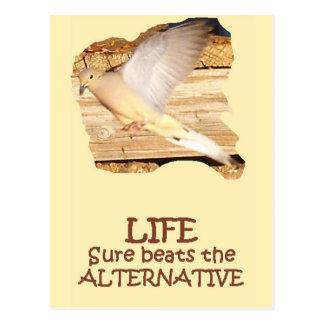 LIFE--Flying Dove Postcard
