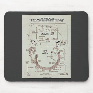 Life History Of The Malaria Parasite Plasmodiume V Mouse Pad