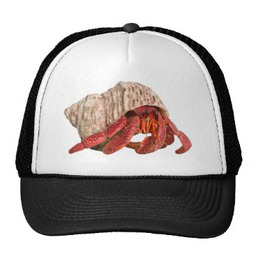 Professional Business Life in a Shell Trucker Hat