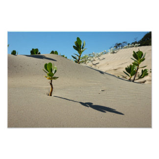 Life in the desert poster