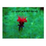 Life is beautiful postcard