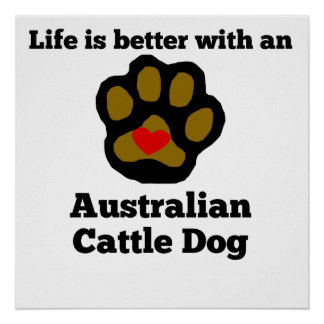 Life Is Better With An Australian Cattle Dog Poster