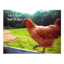 Life Is Better With Chickens Postcard