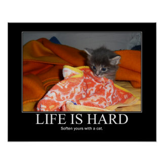 Life is Hard Cat Artwork Kitten Poster