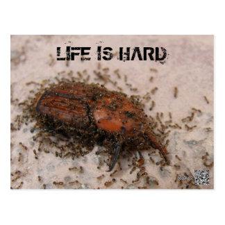 Life is hard Postcard