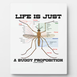Life Is Just A Buggy Proposition (Mosquito Humor) Plaque