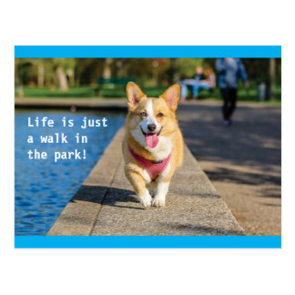Life is just a walk in the park dog postcard
