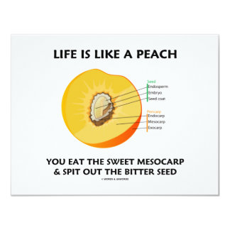 Life Is Like A Peach Eat Sweet Mesocarp Spit Out Card