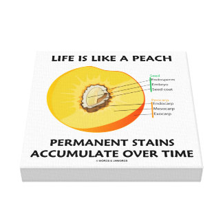 Life Is Like A Peach Permanent Stains Accumulate Canvas Print
