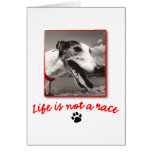 Life is NOT a Race Greeting Cards