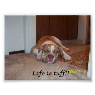 Life is tuff poster