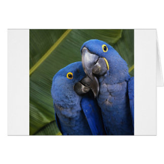 Life is what you make it! Tropical birds Greeting Cards
