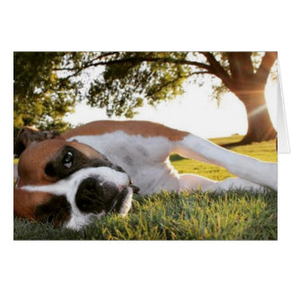 Life Kicking Your Tail Too? Boxer Note Card