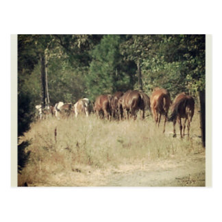 Life on the Ranch Postcard