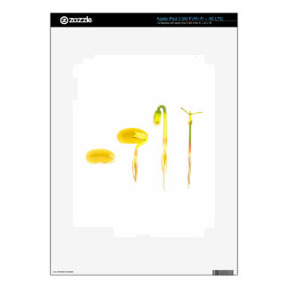 Lifecycle germination bean on white for education iPad 3 decals
