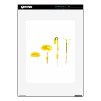 Lifecycle germination bean on white for education iPad skin