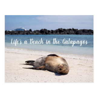 Life's a Beach in the Galapagos Postcard