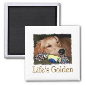 Life's Golden Magnet