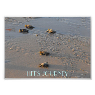 lifes  journey sea turtles poster