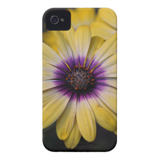 Life's Little Joys iPhone 4 Cover