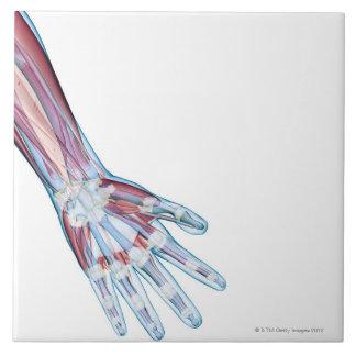 Ligamentos en la mano azulejo cuadrado grande
