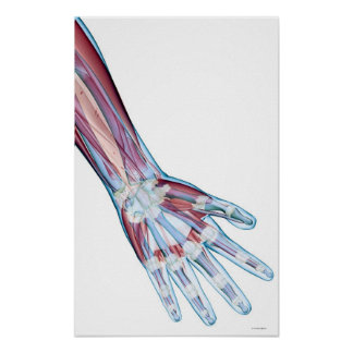 Ligamentos en la mano póster