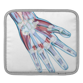 Ligaments in the Hand Sleeves For iPads