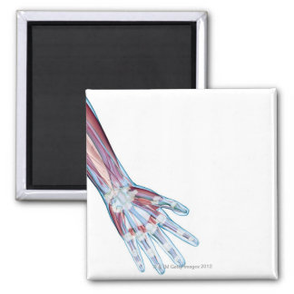 Ligaments in the Hand 2 Inch Square Magnet
