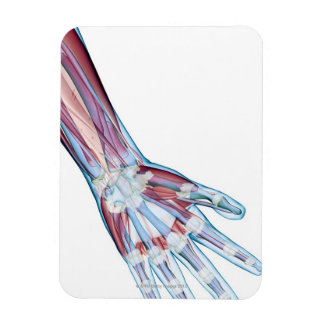 Ligaments in the Hand Rectangular Photo Magnet