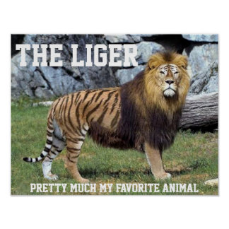 LIGER PRETTY MUCH MY FAVORITE ANIMAL POSTER