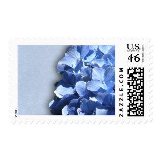 LIght and dark blue hydrangeas Postage Stamp