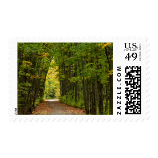 Light At The End Of A Tunnel Of Trees Postage
