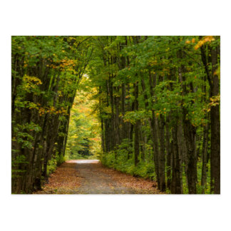 Light At The End Of A Tunnel Of Trees Postcards