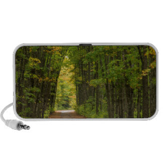 Light At The End Of A Tunnel Of Trees Travel Speaker