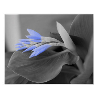 Light Blue Buds selective color photo Poster