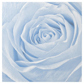 Light Blue Pastel Rose, Floral Nature Photography Gallery Wrap
