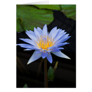 Light Blue Water Lily Greeting Card