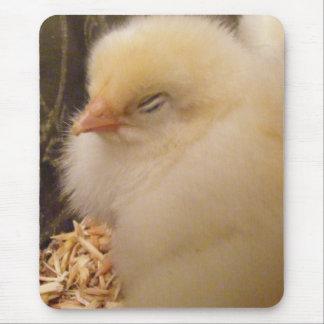 Light Brahma Chick Mouse Pad