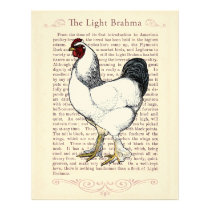 Light Brahma Rooster Vintage Country Classic Letterhead