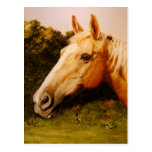 Light Chestnut Horse Postcard