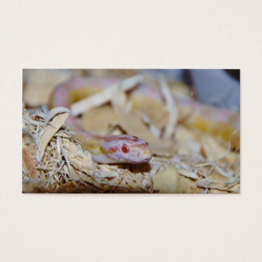 Light Colored Corn Snake Business Card