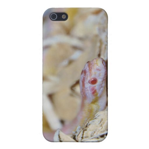 Light Colored Corn Snake iPhone 5 Covers
