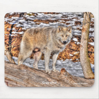 Light-coloured Grey Wolf on Log in Winter Snow Mouse Pad