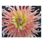 Light Dahlia 10x8 Photo Print