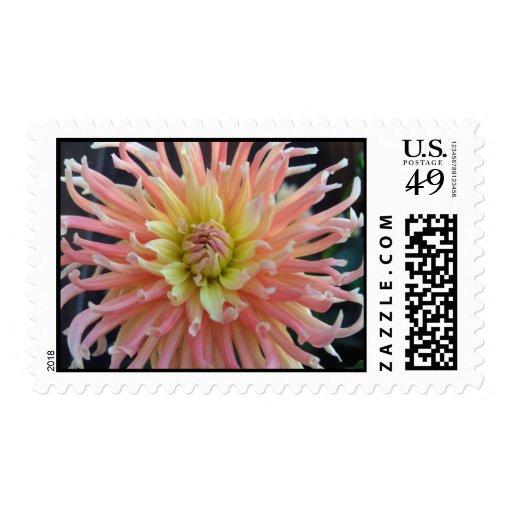 Light Dahlia Stamps