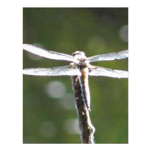 Light grey dragonfly custom letterhead